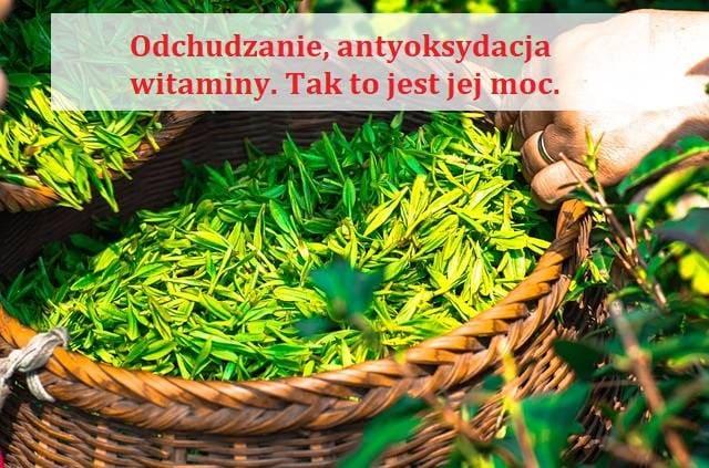 matcha zielona herbata odchudzanie pozdrowie24.pl antyoksydacja